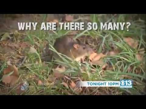 Rat Zone Getting Answers | Tonight On CBS 13 News At 10 (KVOR-TV Promo)