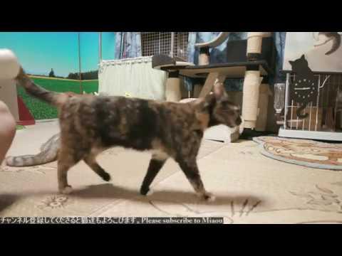 2018.8.15 猫日記   Cats & Kittens room 【Miaou みゃう】