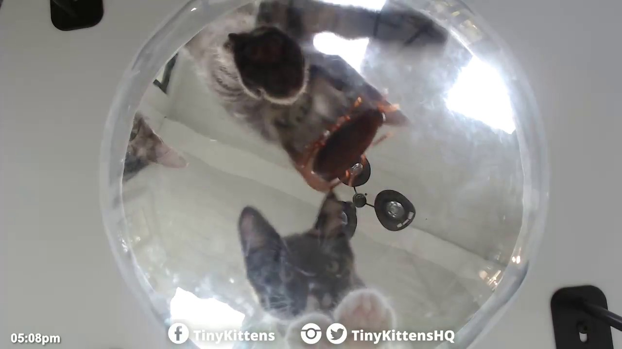 Kittens vs. Cockroach - TinyKittens.com