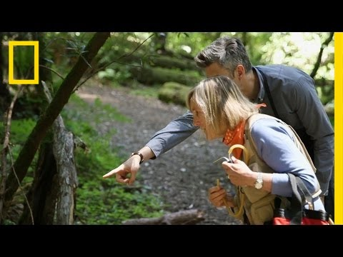 Seriously, Trees Are Amazing | Going Deep With David Rees