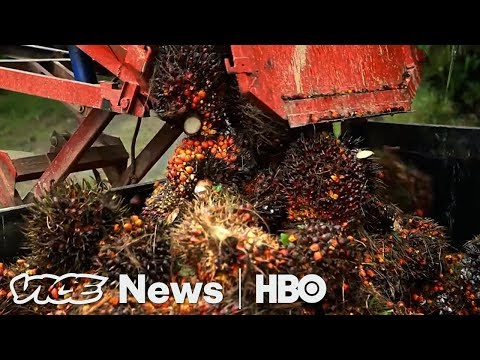 How One Country Stopped Eating The Rainforest (HBO)