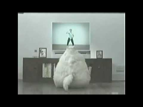 Funny Fat Cat Dancing - YouTube