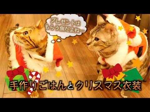 手作りごはんでルトとロゼとクリスマスパーティーしたよ!!