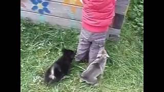 Отдаем щенков даром, Екатеринбург.