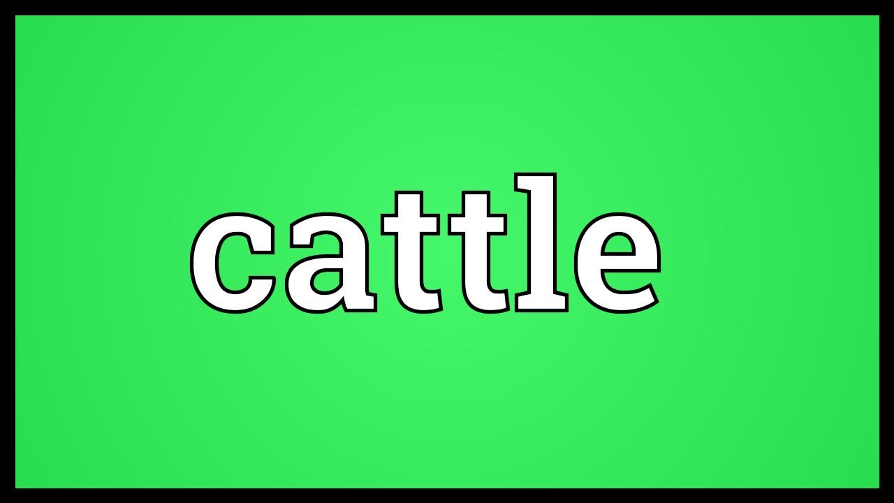 Cattle Meaning