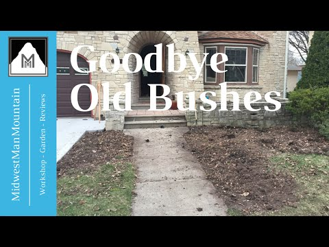 How To Remove Old Overgrown Shrubs Bushes