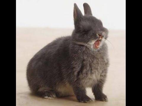 Bunny rabbit sneezing - YouTube