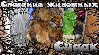 Спасение животных в Судаке