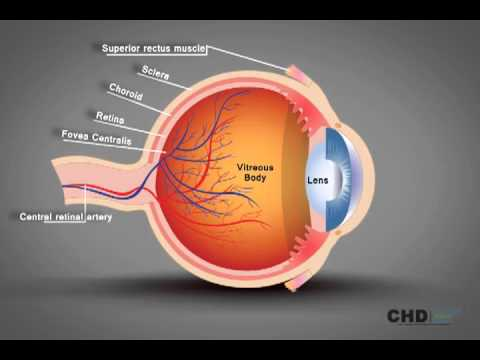 Human eye structure eye anatomy explained youtube human eye structure eye anatomy explained ccuart Image collections