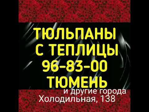 Тюльпаны оптом на 8 марта Лянтор, Пыть-Ях, Уват, Ноябрьск, Салехард, Радужный, Исетск, Новый Уренгой