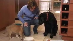Pet Food Buying Advice | Consumer Reports
