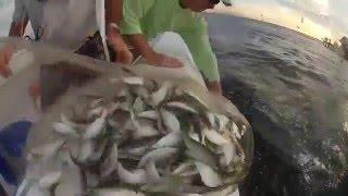 denizden serpme ile balık avı