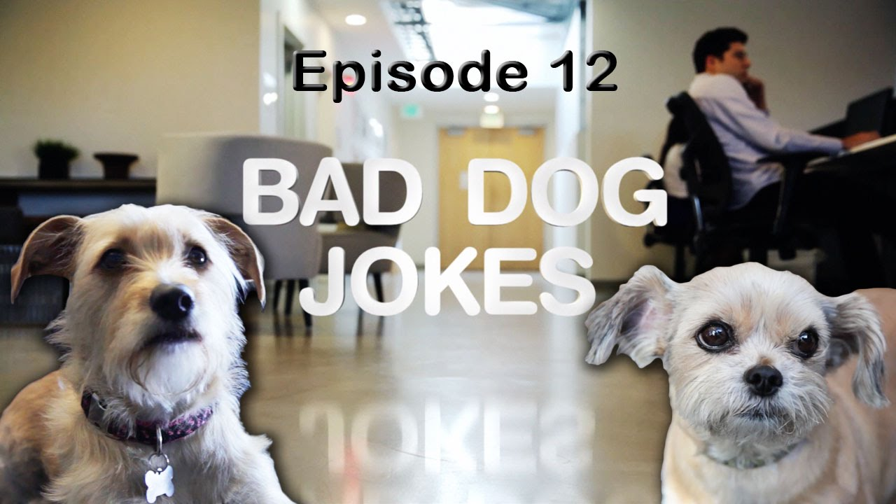 Bad Dog Jokes - Episode 12