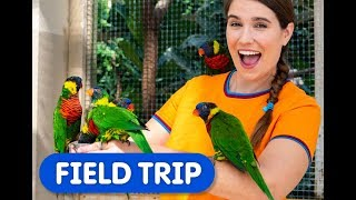 Caitie  Visits Bird Kingdom | Caitie's Classroom