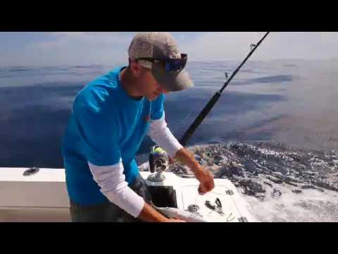How To Rig A Skip Bait For Marlin - Quick And Easy