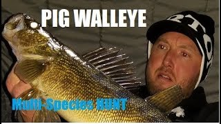 Ice Fishing WALLEYE : Multi Species on thin Ice!
