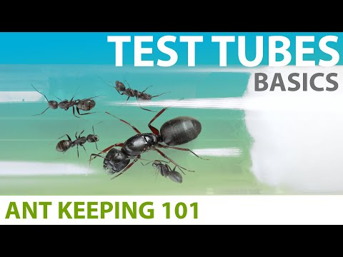 Keeping Ants In Test Tubes (Basics) | Ant Keeping 101