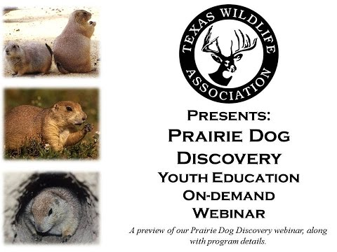 Prairie Dog Discovery preview