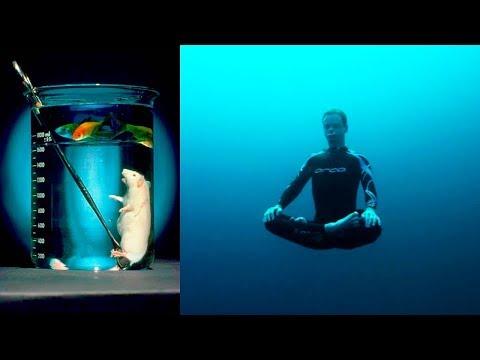 كيف تتنفس تحت الما لساعات بدون أنبوب أكسجين