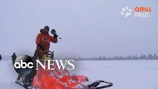 Norwegian musher and Iditarod winner finally goes home