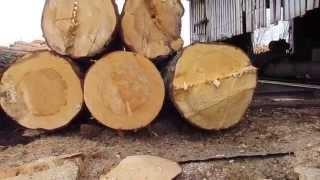 Первичная обработка древесины - ООО Северный лес