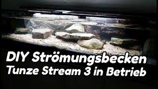 DIY Strömungsbecken - Tunze Stream 3 in Betrieb (#5)
