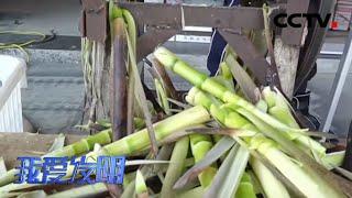 《我爱发明》 20200522 竹笋剥衣|CCTV农业