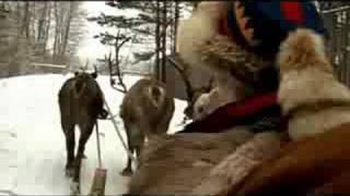 Катание на оленьих упряжках