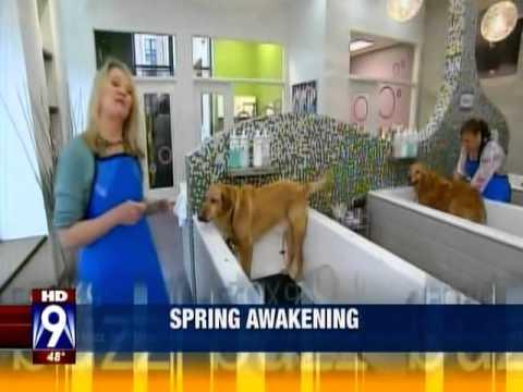 Fox 9 at bubbly paws dog wash youtube fox 9 at bubbly paws dog wash solutioingenieria Choice Image