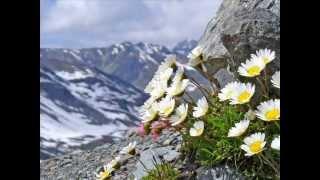 Le colline sono in fiore * - Wilma Goich