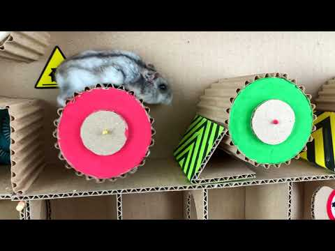 🐹Amazing Hamster Maze With Traps 😱[OBSTACLE COURSE]😱 + BONUS