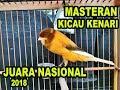 Kenari Gacor Juara Nasional 2018 Masteran Kenari Full Ngekek(.mp3 .mp4) Mp3 - Mp4 Download
