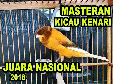 Download Lagu KENARI GACOR JUARA NASIONAL 2018 MASTERAN KENARI FULL