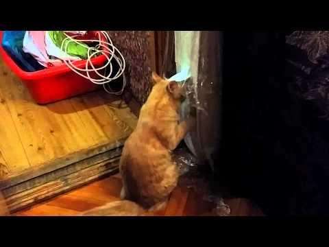 Кошка снимает стресс после переезда