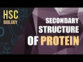 ০৮৭) অধ্যায় ৩ - কোষ রসায়ন : Secondary Structure of Protein [HSC | Admission]