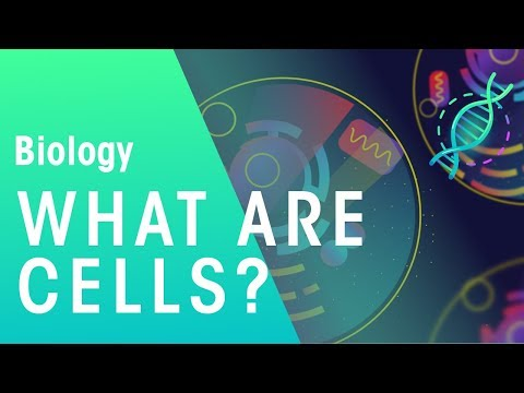 what-are-cells-|-cells-|-biology-|-fuseschool