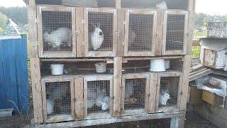 ██Уличная клетка для кроликов/ размеры/ плюсы и минусы