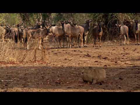 Zambia's South Luangwa
