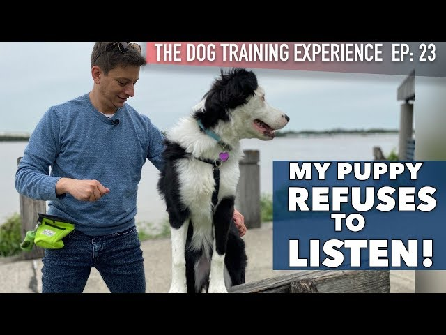 My Dog Listens at Home, But Definitely Not Here!