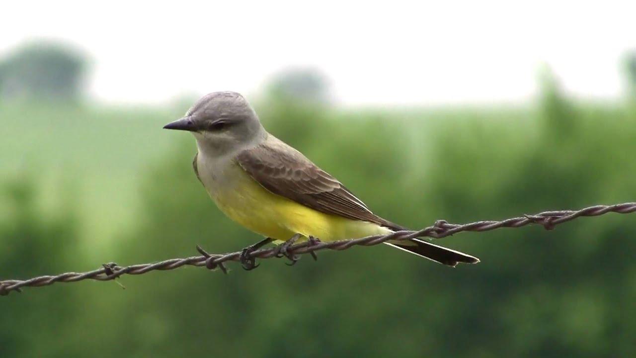 wild birds of northeast oklahoma part 1 of 4 youtube