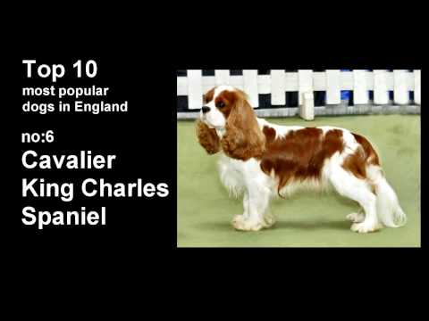 Top 10 popular dog breeds in the UK