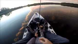 Big 50cm Aus Bass on surface lure at Ewen Maddock dam - Lure Instinct