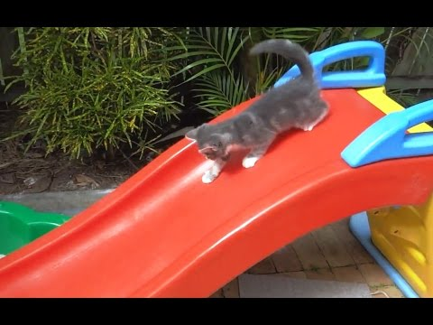 'Kittens on Slides - Compilation' || CFS