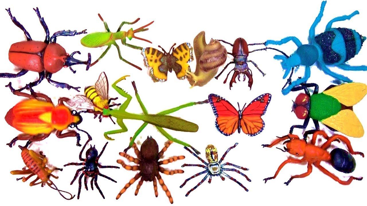 insects names for kids bugs beetles spiders toy videos for
