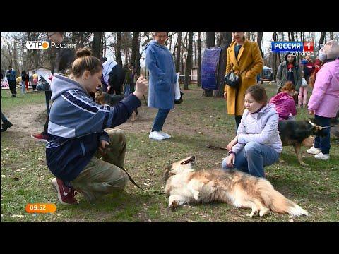 В добрый дом к добрым хозяевам: выставку-раздачу бездомных животных провели в Белгороде