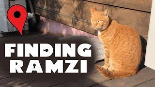 인간 GPS가 되어 고양이 람쥐를 추적해 보았습니다