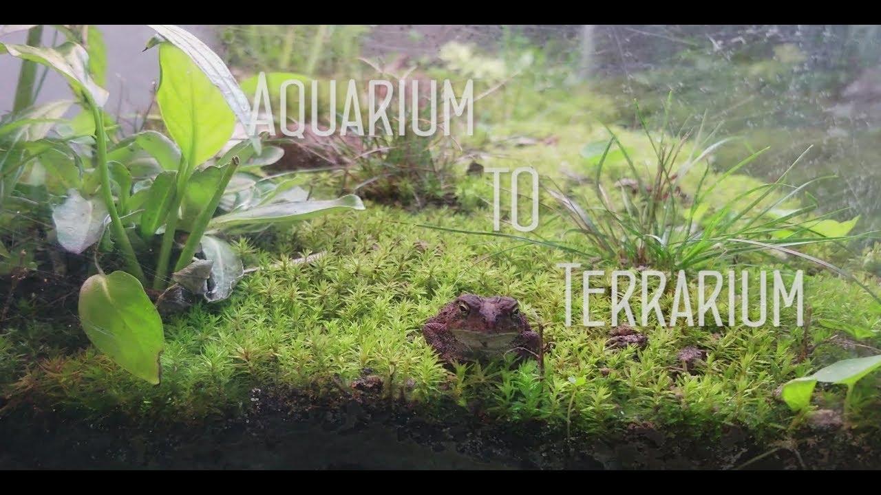 Aquarium To Terrarium Youtube