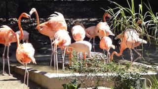 Flamingo feeding device; San Diego Zoo