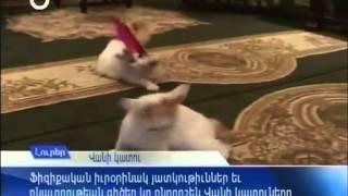 cat of Van