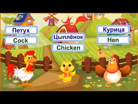 Домашние птицы для детей на английском языке - Видео-тренажер